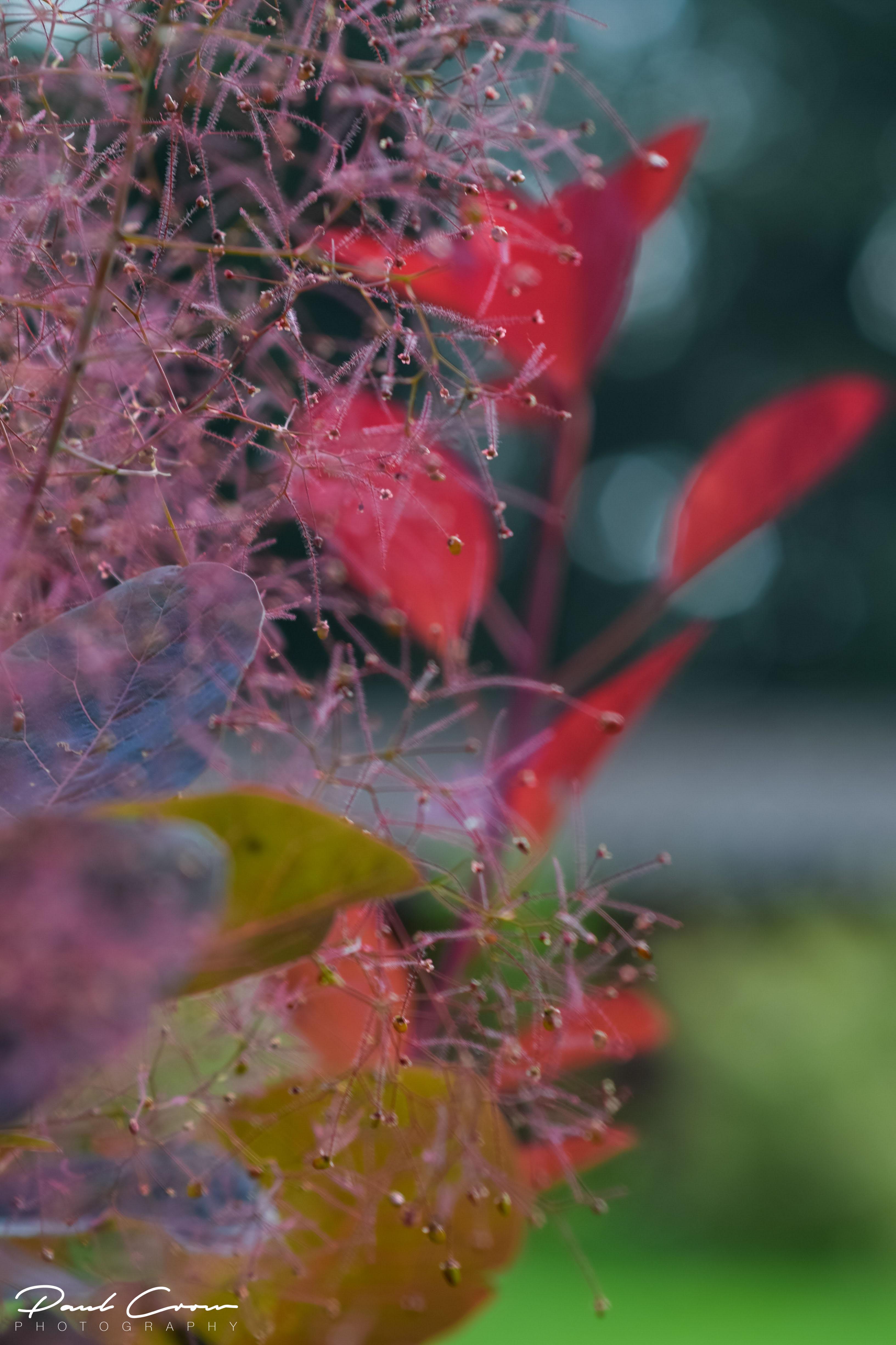 Fairytale Leaves