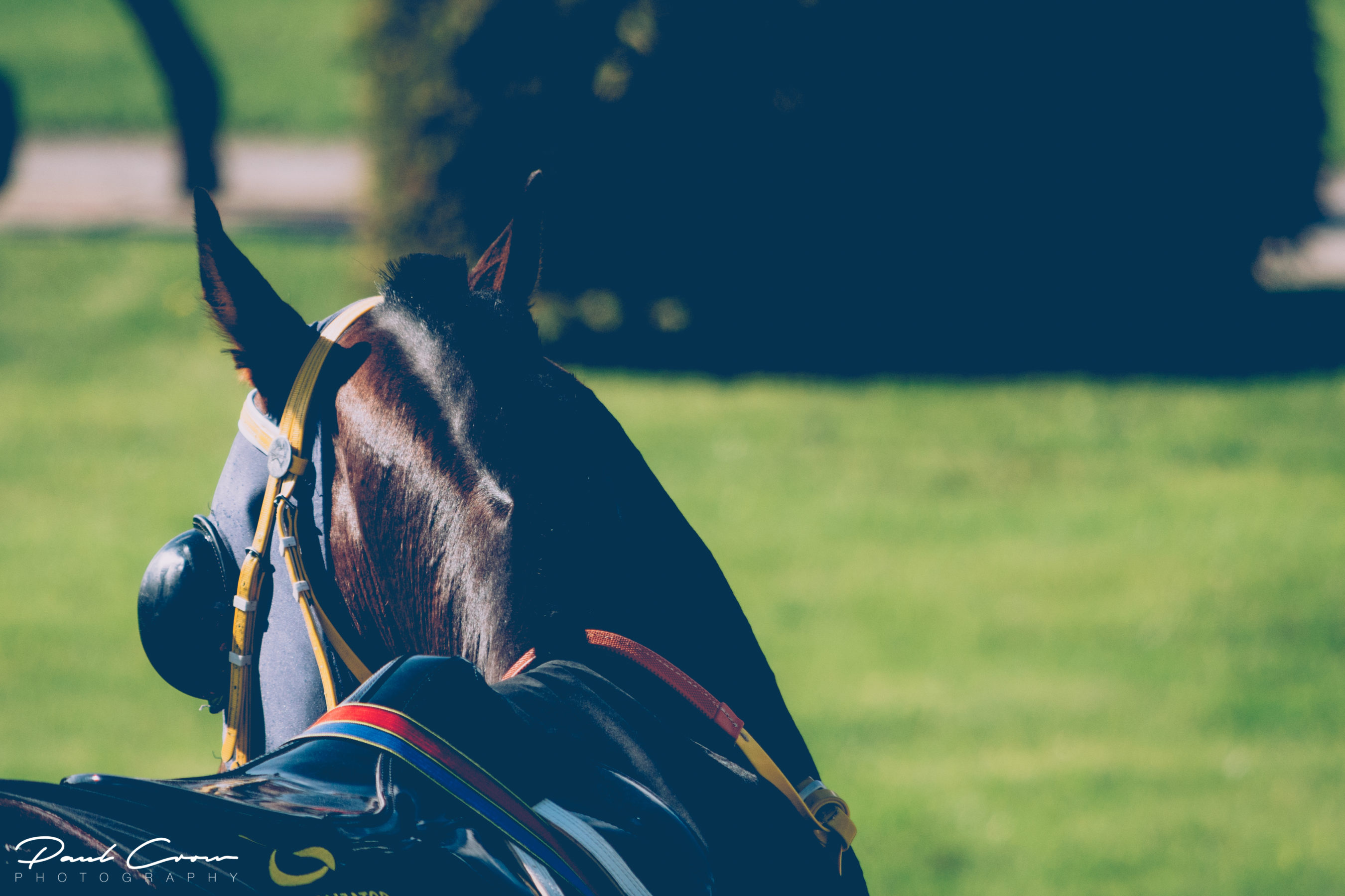 Minimalist Horse details