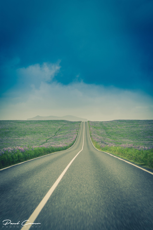 Icelandic road od lupine