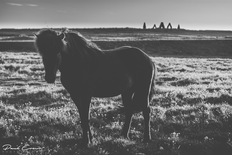 Black Horse in Raufarhöfn